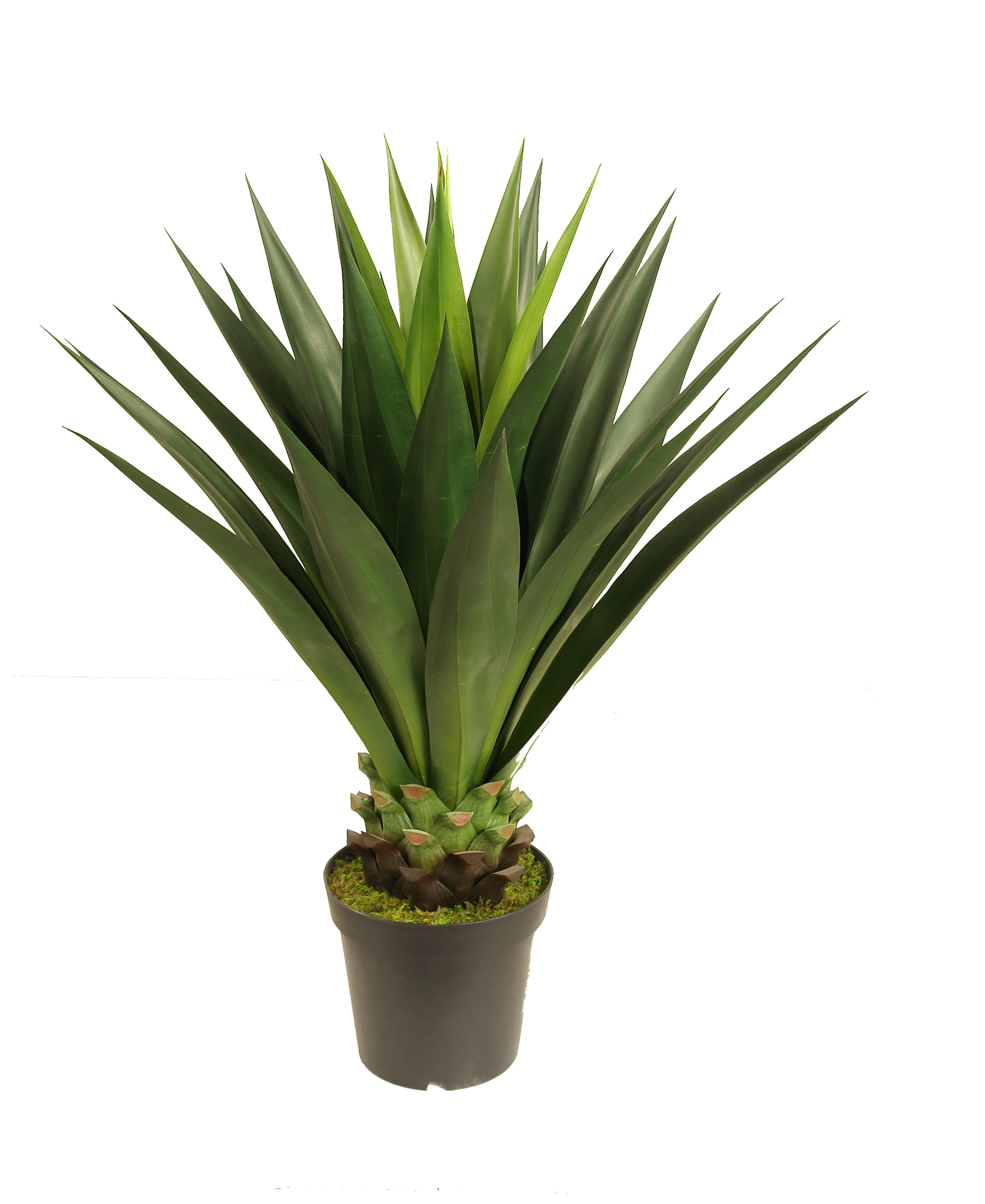 ARTIFICIAL-GIANT-AGAVE