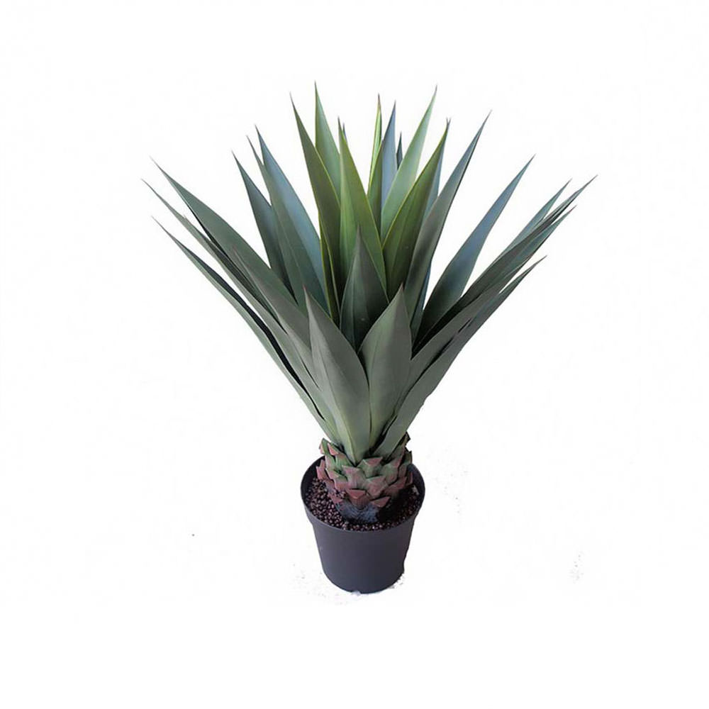 Agaves & Artificial Cycads