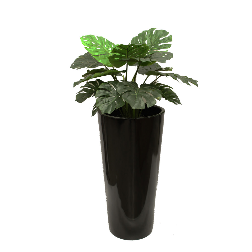MOSTERIA PLANT